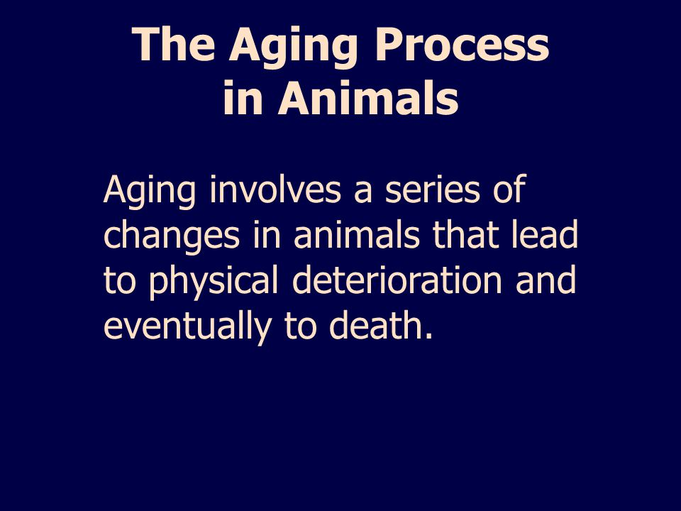 The Aging Process in Animals