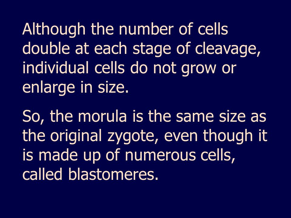 Although the number of cells double at each stage of cleavage, individual cells do not grow or enlarge in size.