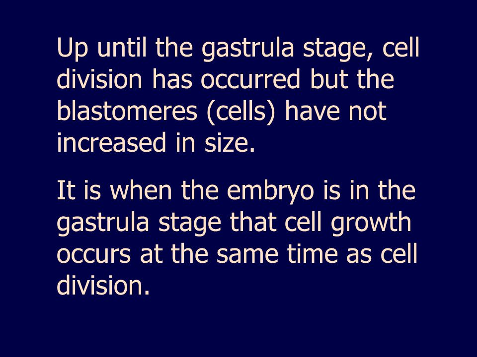 Up until the gastrula stage, cell division has occurred but the blastomeres (cells) have not increased in size.