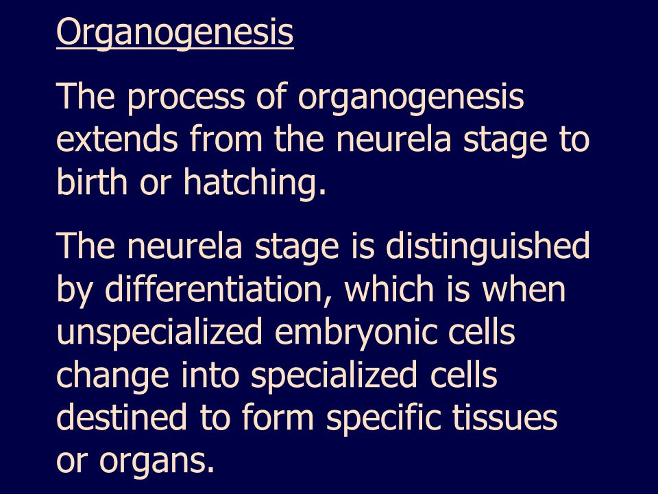 Organogenesis The process of organogenesis extends from the neurela stage to birth or hatching.