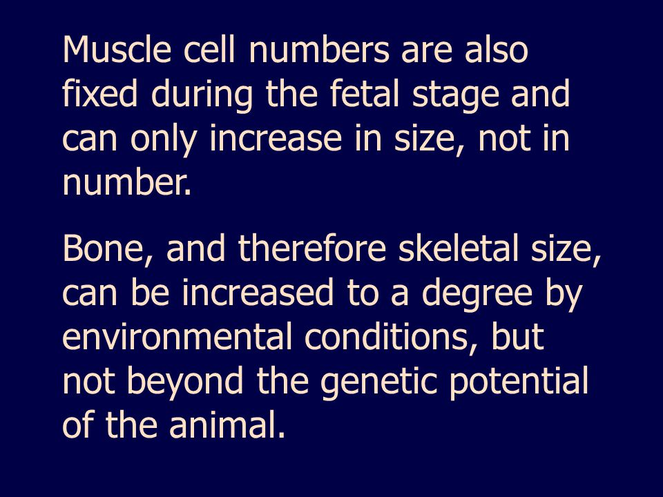 Muscle cell numbers are also fixed during the fetal stage and can only increase in size, not in number.