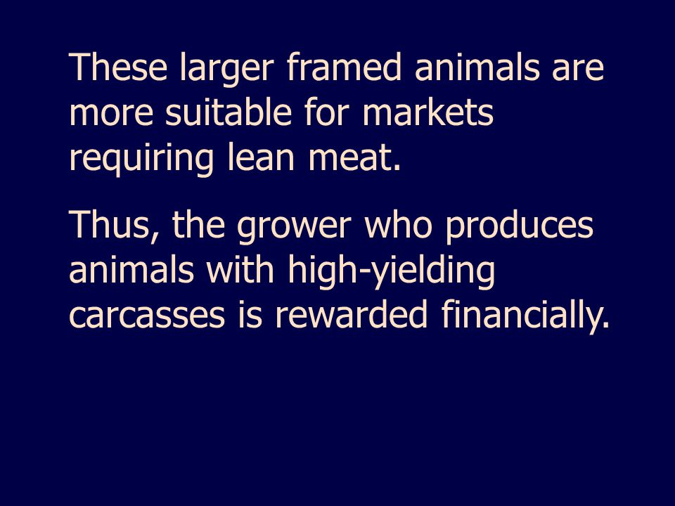 These larger framed animals are more suitable for markets requiring lean meat.