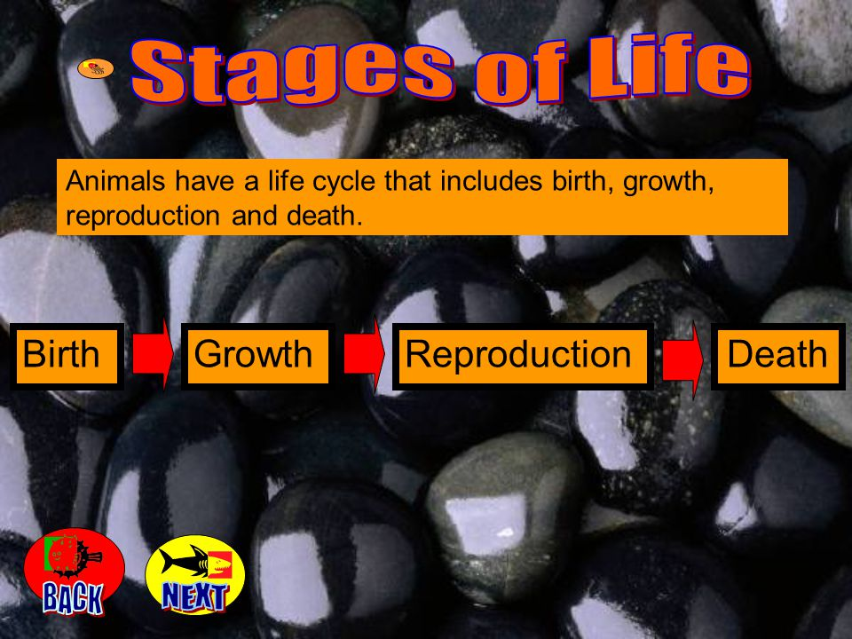 Stages of Life BACK NEXT Birth Growth Reproduction Death