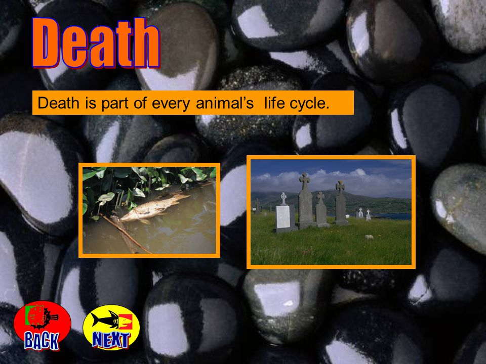 Death Death is part of every animal's life cycle. BACK NEXT