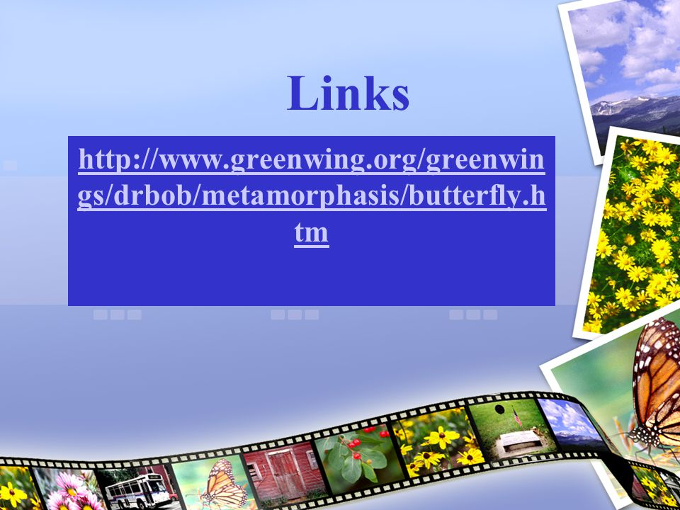 Links http://www.greenwing.org/greenwings/drbob/metamorphasis/butterfly.htm
