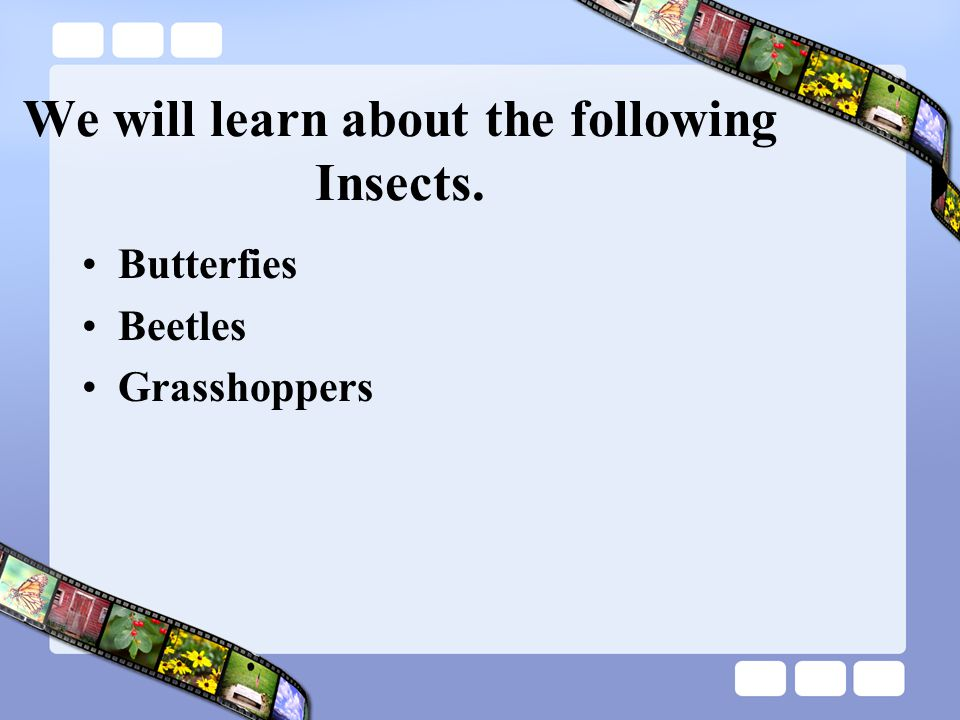 We will learn about the following Insects.