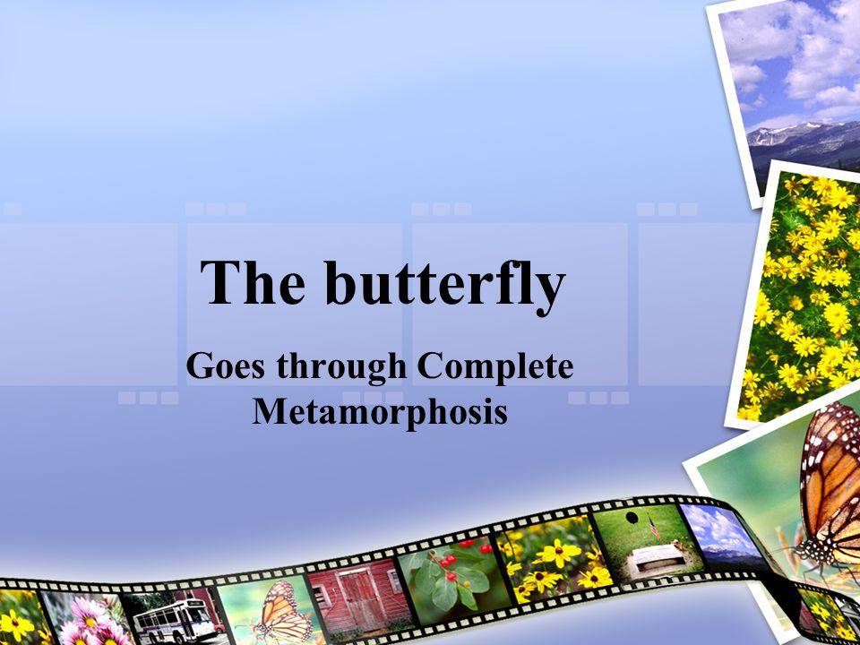 Goes through Complete Metamorphosis