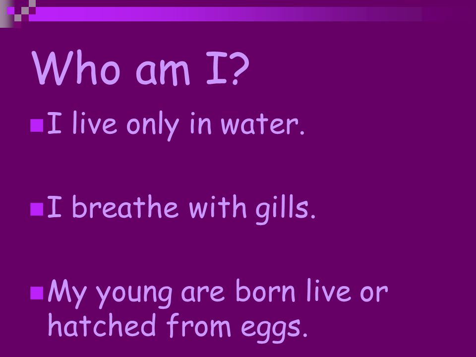 Who am I I live only in water. I breathe with gills.