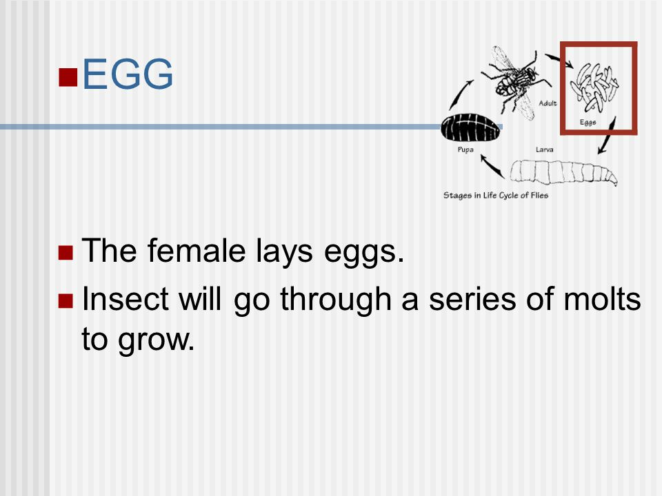 EGG The female lays eggs.