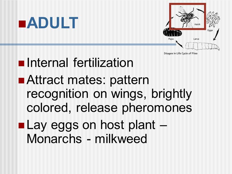ADULT Internal fertilization