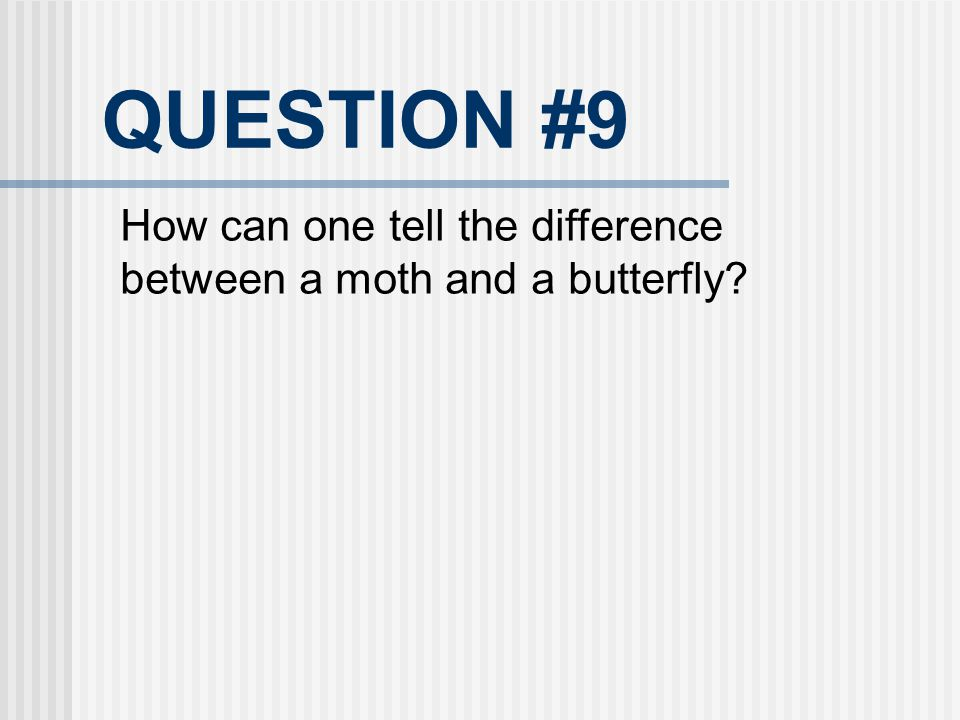 QUESTION #9 How can one tell the difference between a moth and a butterfly 23