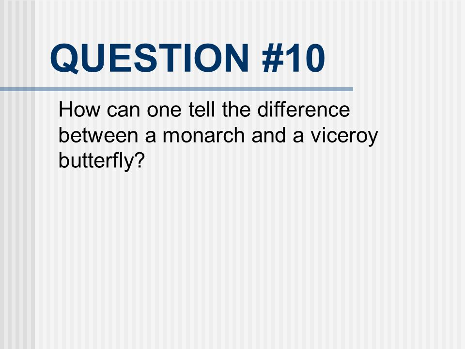 QUESTION #10 How can one tell the difference between a monarch and a viceroy butterfly 24