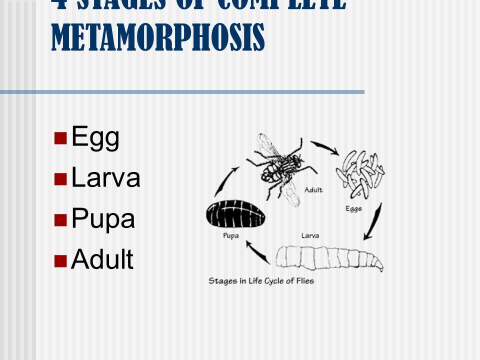 4 STAGES OF COMPLETE METAMORPHOSIS