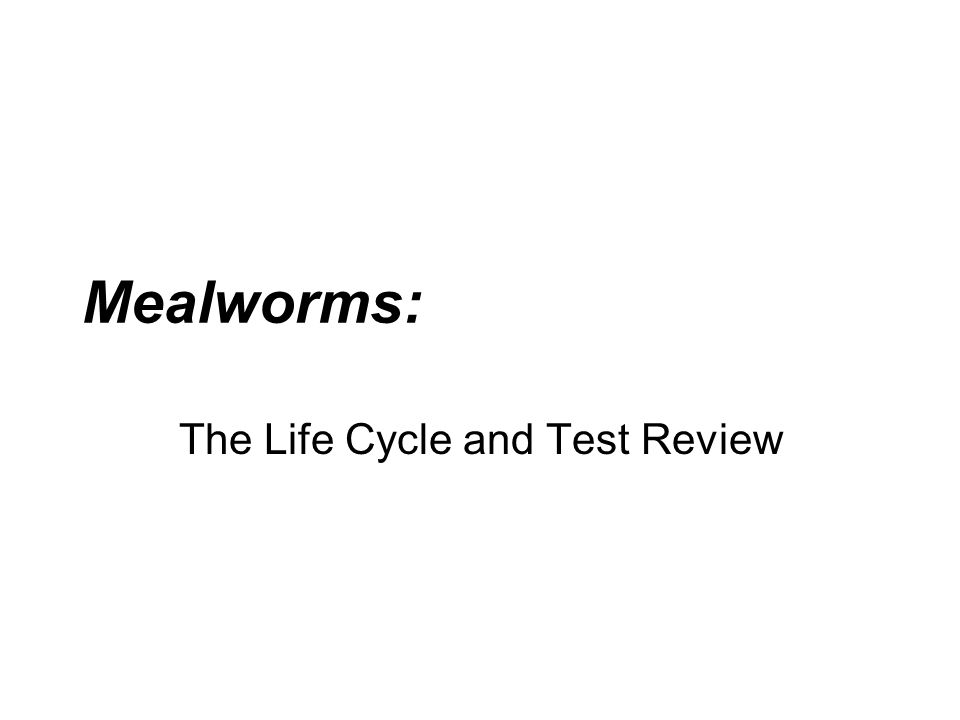 The Life Cycle and Test Review