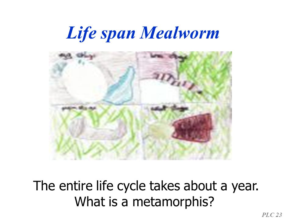The entire life cycle takes about a year.