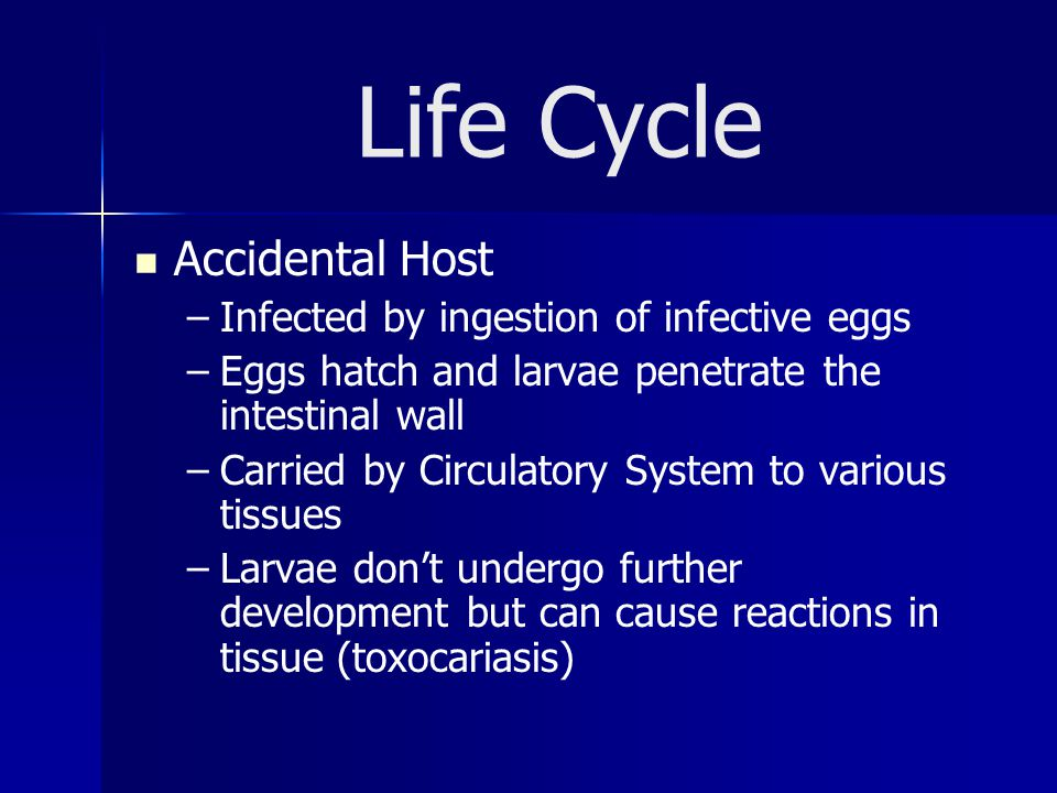 Life Cycle Accidental Host Infected by ingestion of infective eggs
