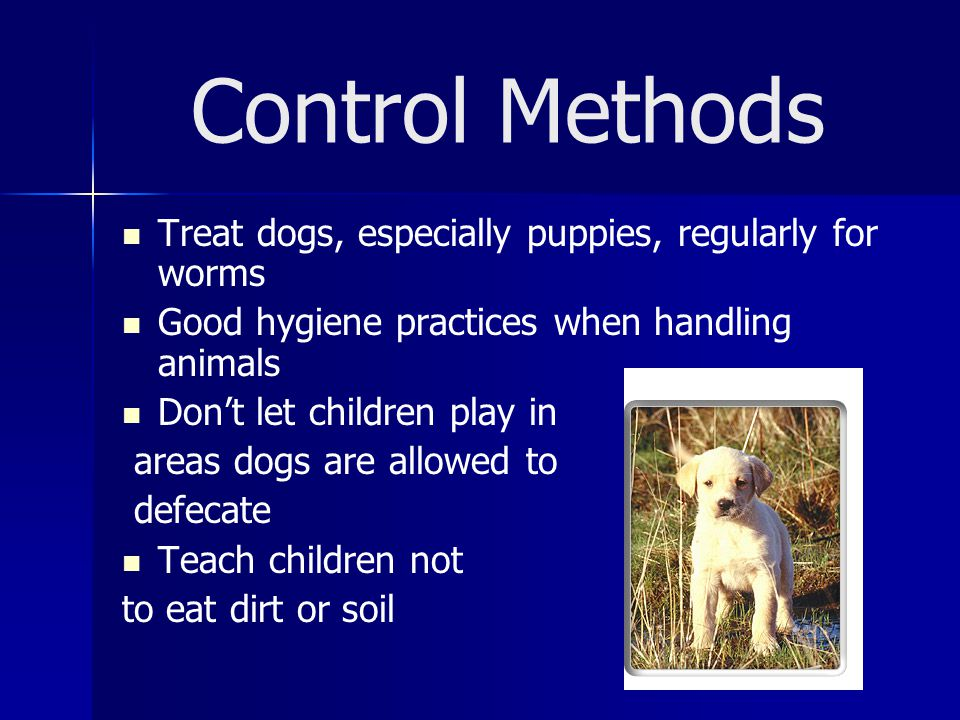 Control Methods Treat dogs, especially puppies, regularly for worms