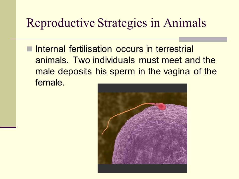 Reproductive Strategies in Animals