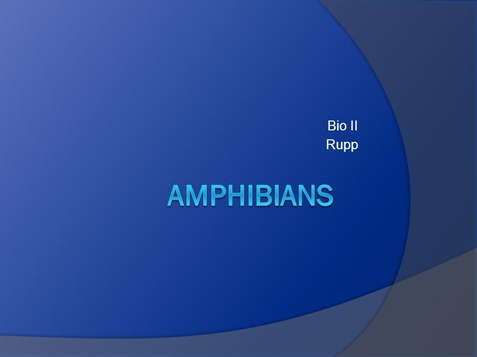 Bio II Rupp Amphibians