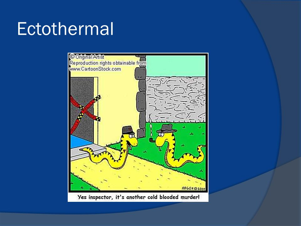 Ectothermal