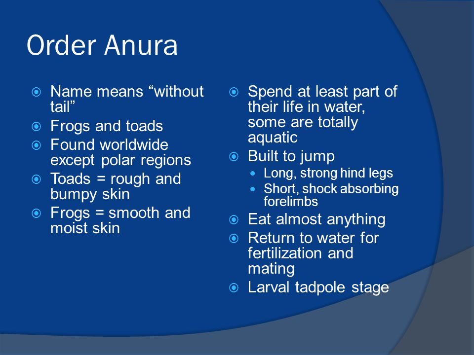 Order Anura Name means without tail Frogs and toads