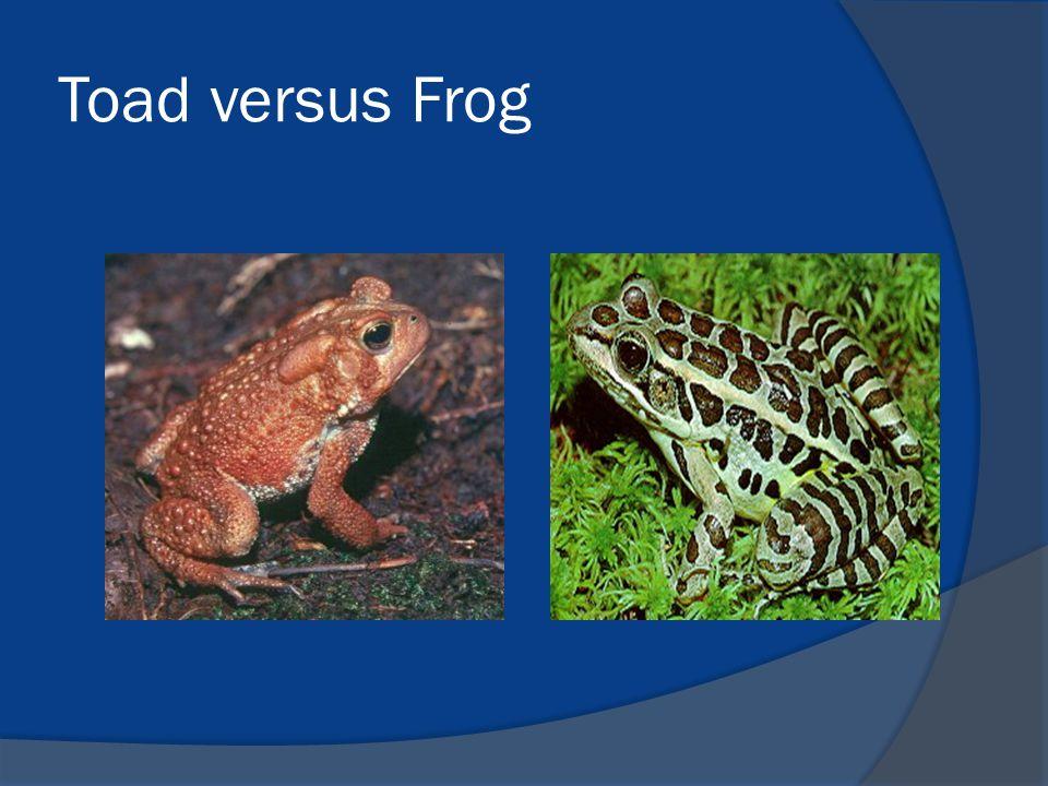 Toad versus Frog