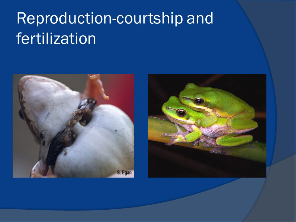 Reproduction-courtship and fertilization