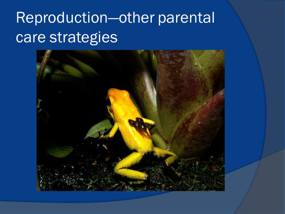 Reproduction—other parental care strategies