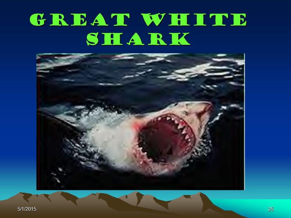 Great White shark 4/14/2017