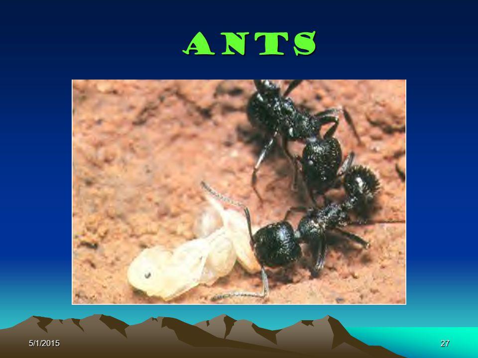 Ants 4/14/2017
