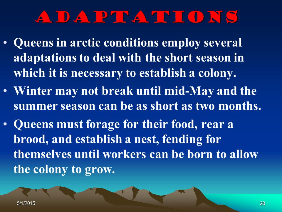 Adaptations Queens in arctic conditions employ several adaptations to deal with the short season in which it is necessary to establish a colony.