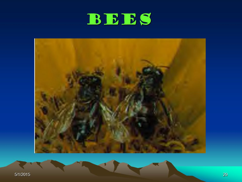 Bees 4/14/2017