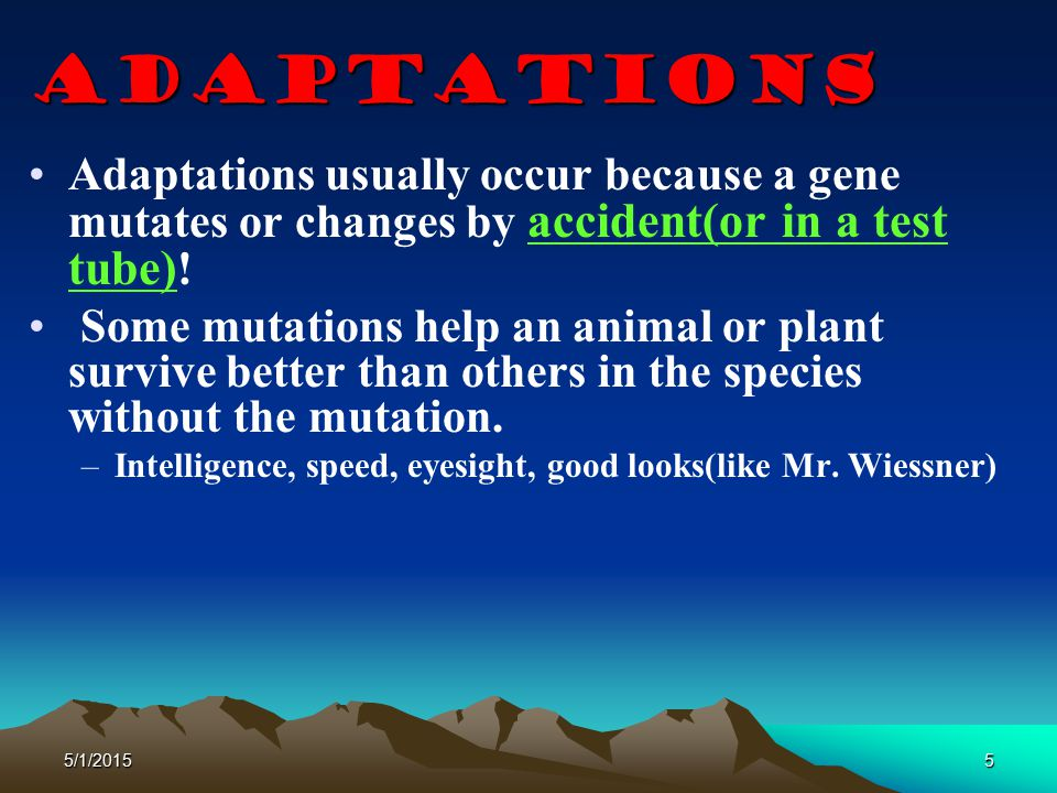 Adaptations Adaptations usually occur because a gene mutates or changes by accident(or in a test tube)!