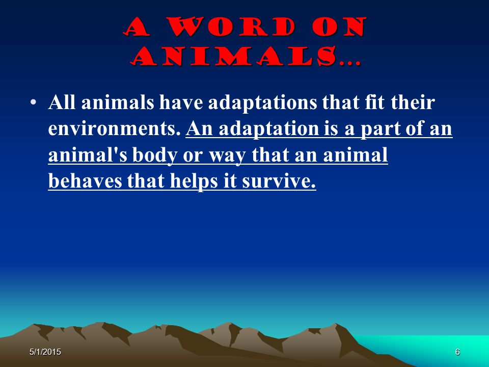 A Word on animals…