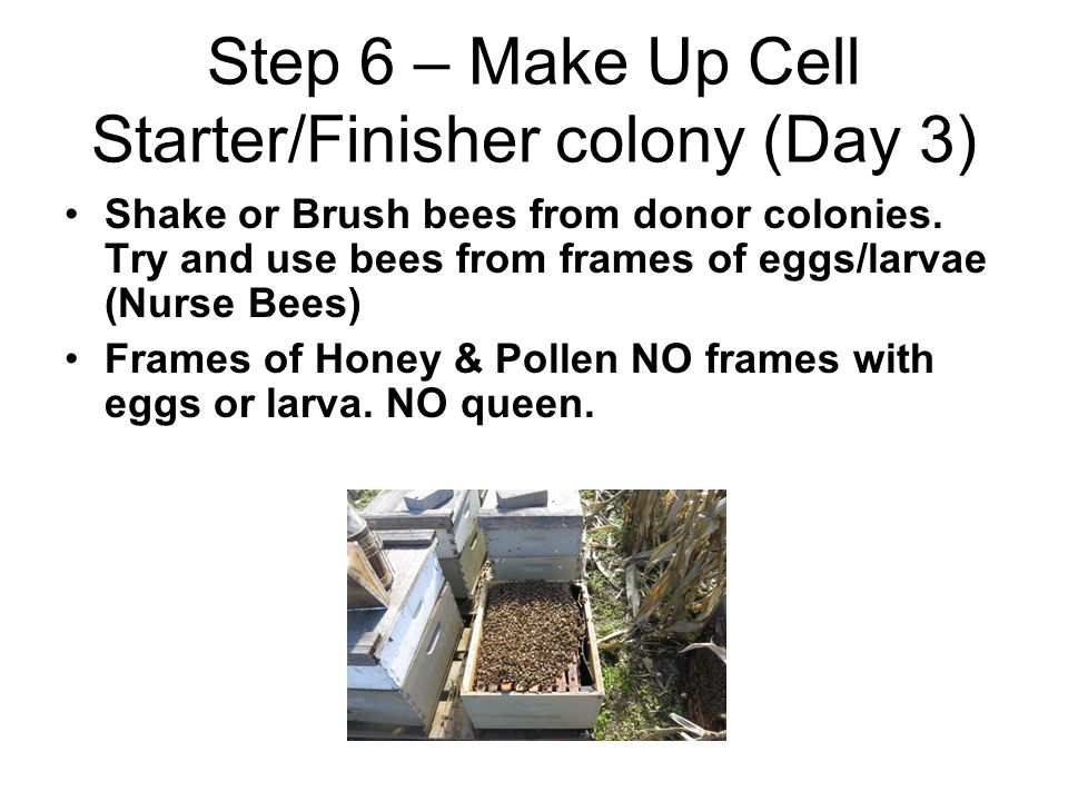 Step 6 – Make Up Cell Starter/Finisher colony (Day 3)
