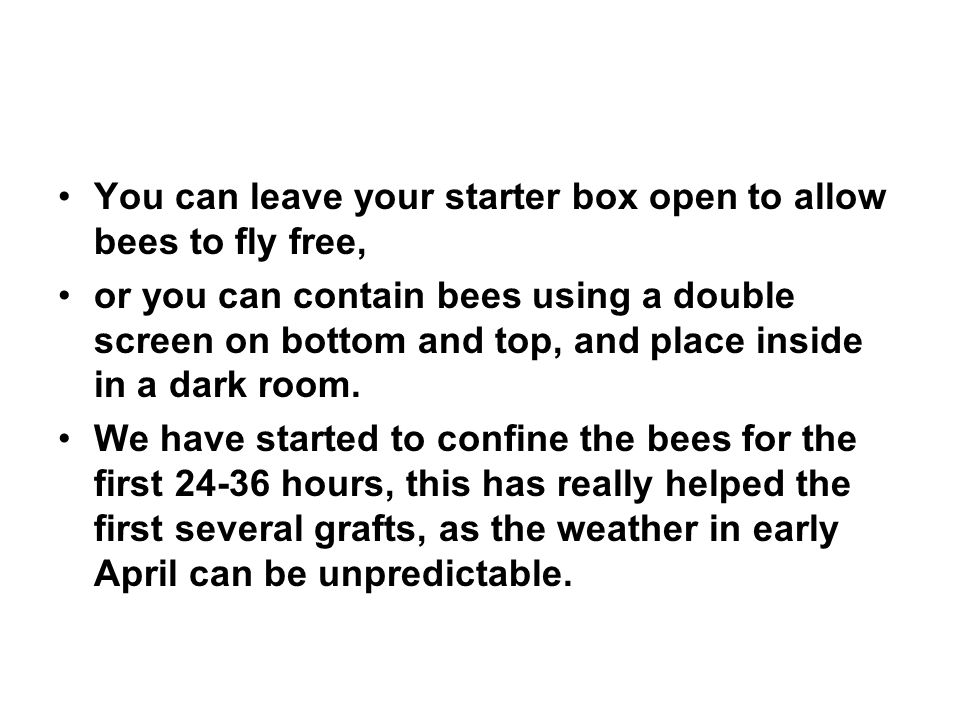 You can leave your starter box open to allow bees to fly free,