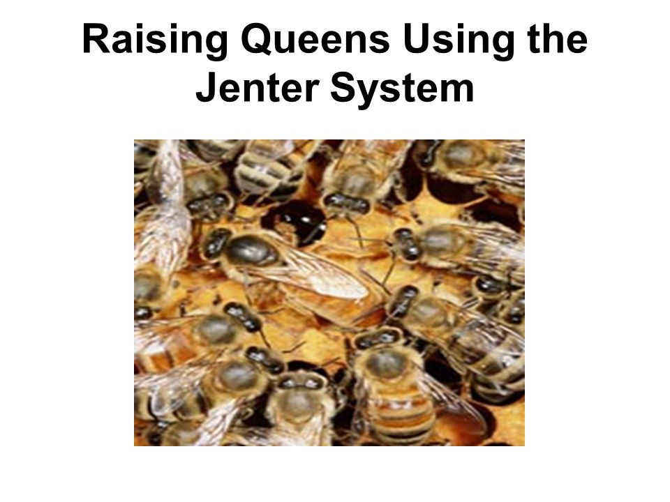 Raising Queens Using the Jenter System