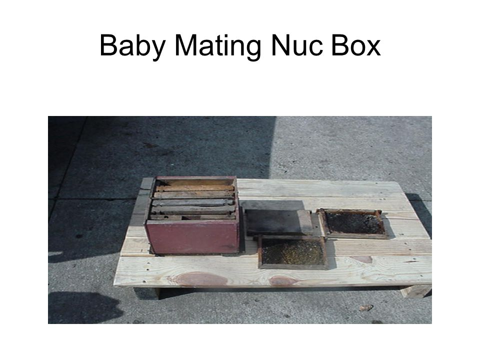 Baby Mating Nuc Box