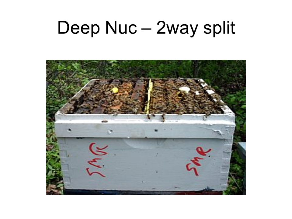 Deep Nuc – 2way split