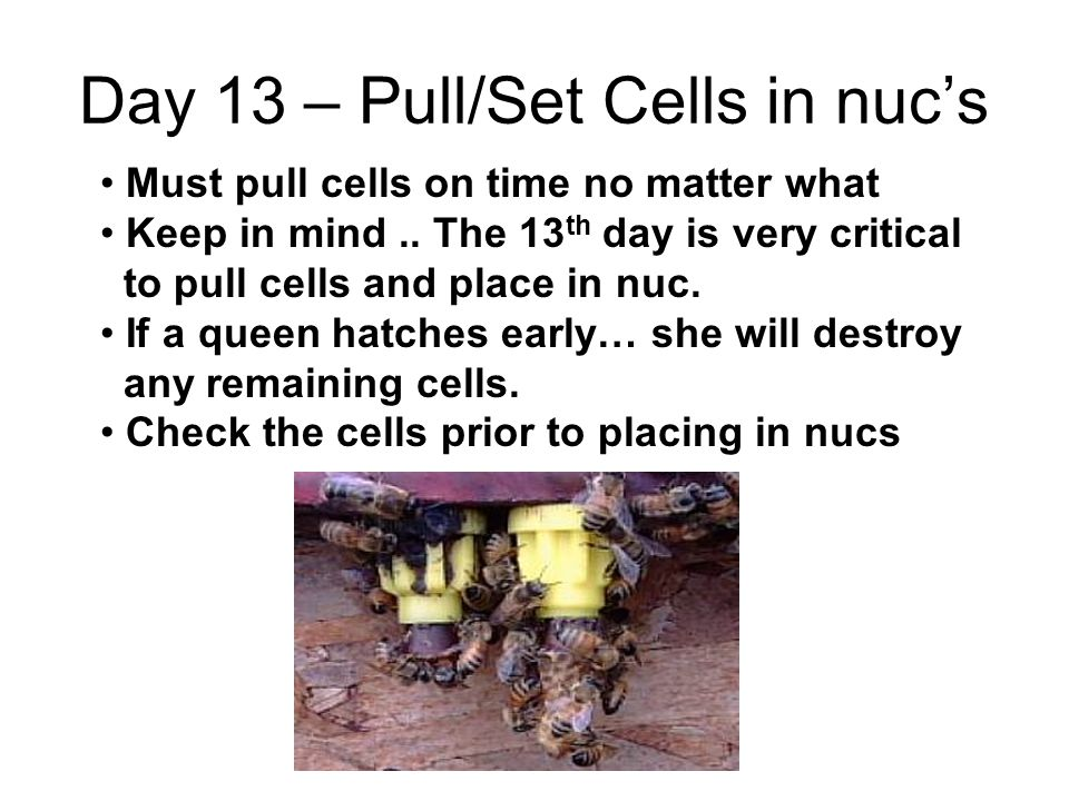 Day 13 – Pull/Set Cells in nuc's