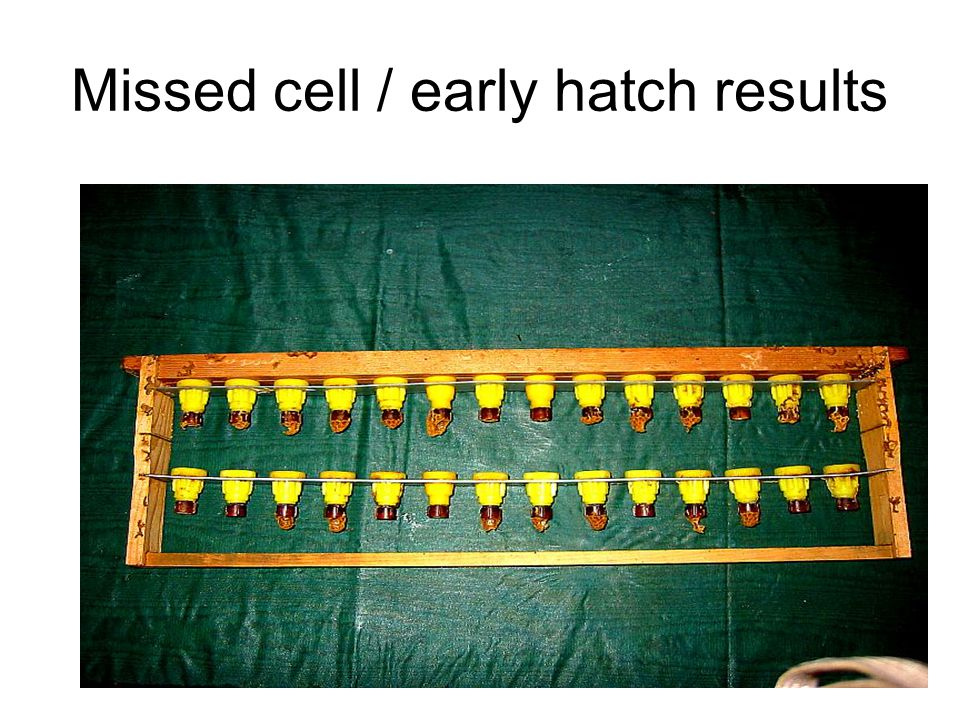 Missed cell / early hatch results