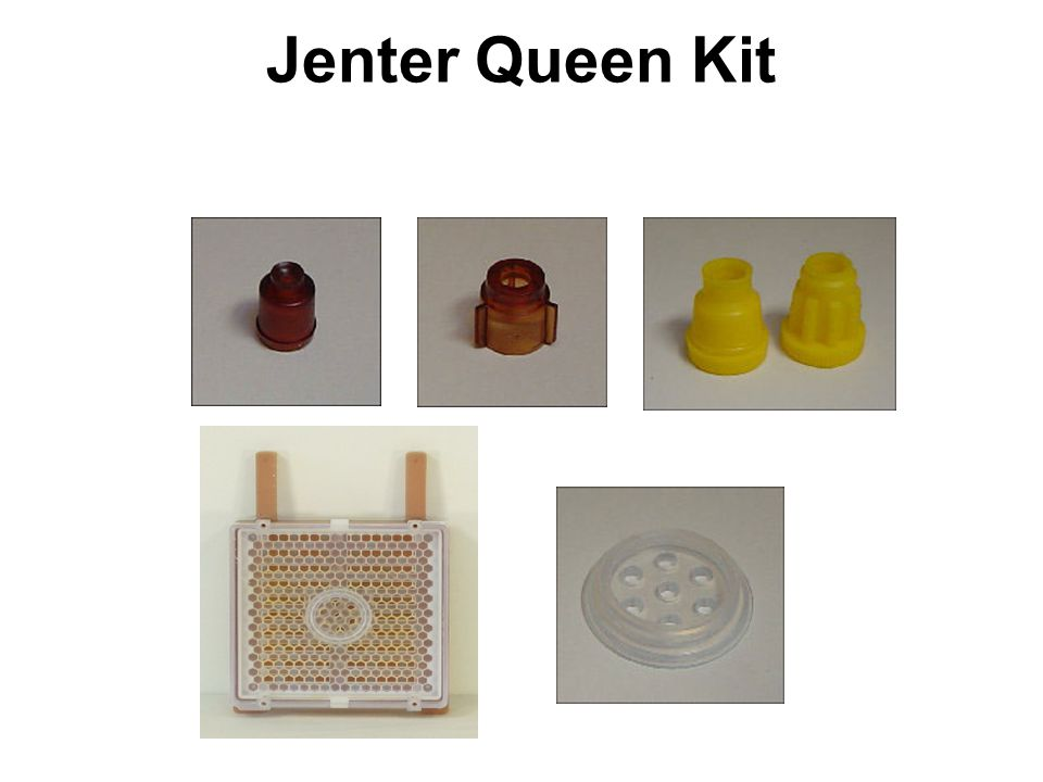 Jenter Queen Kit