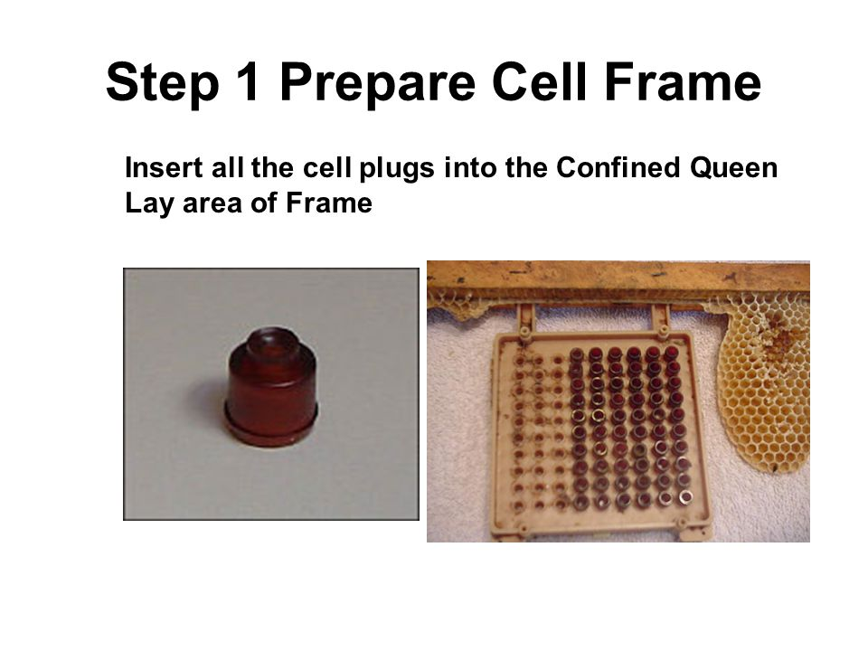 Step 1 Prepare Cell Frame
