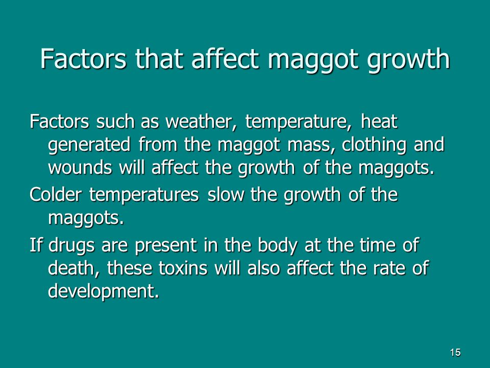 Factors that affect maggot growth