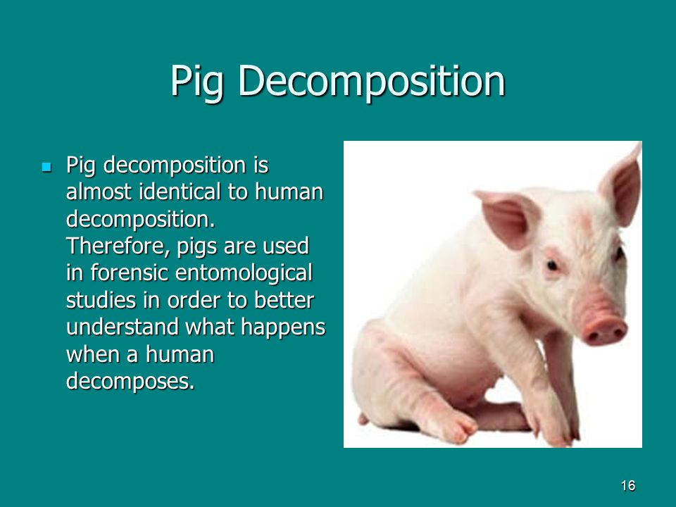Pig Decomposition