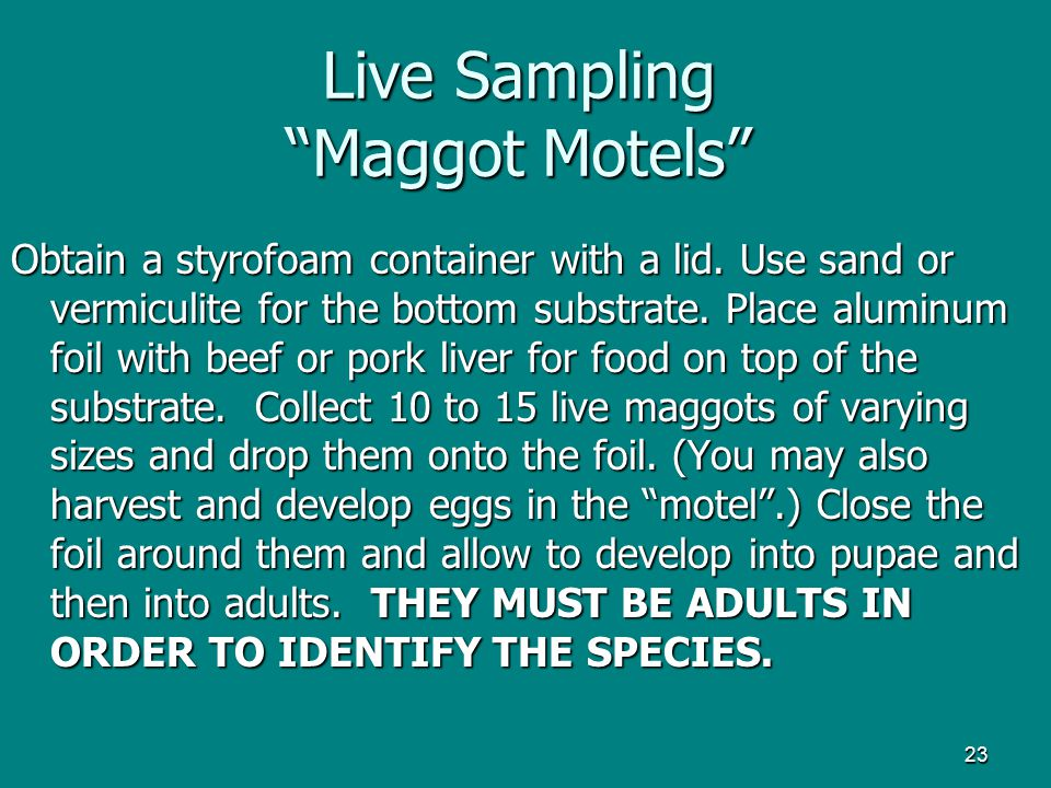 Live Sampling Maggot Motels
