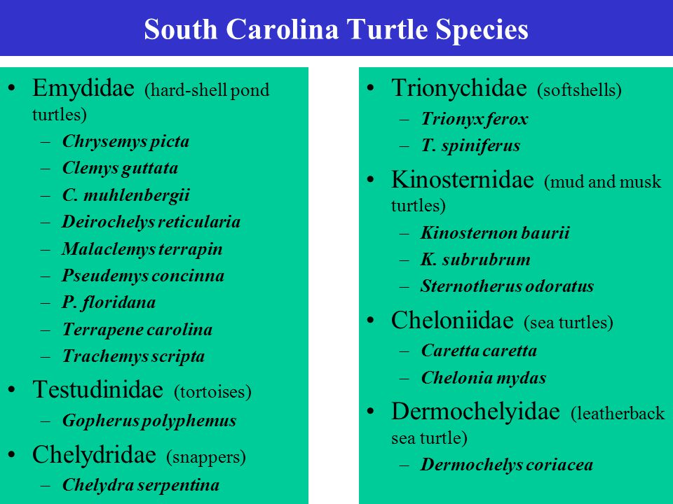 South Carolina Turtle Species