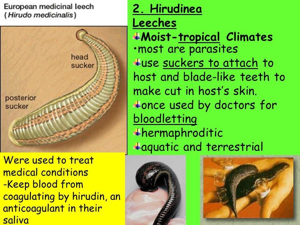 Moist-tropical Climates