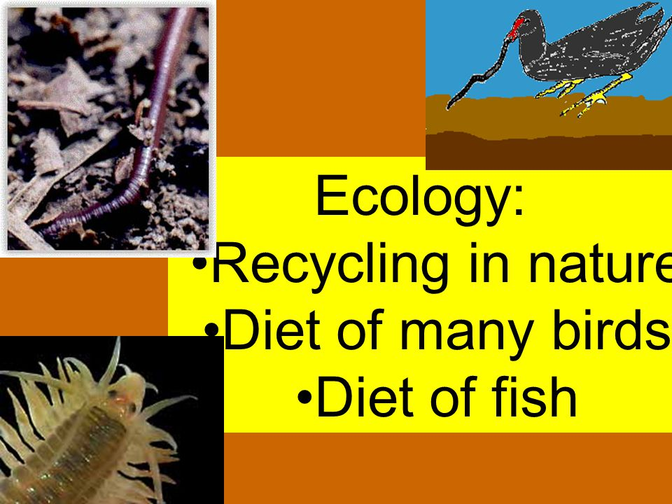 Ecology: Recycling in nature Diet of many birds Diet of fish