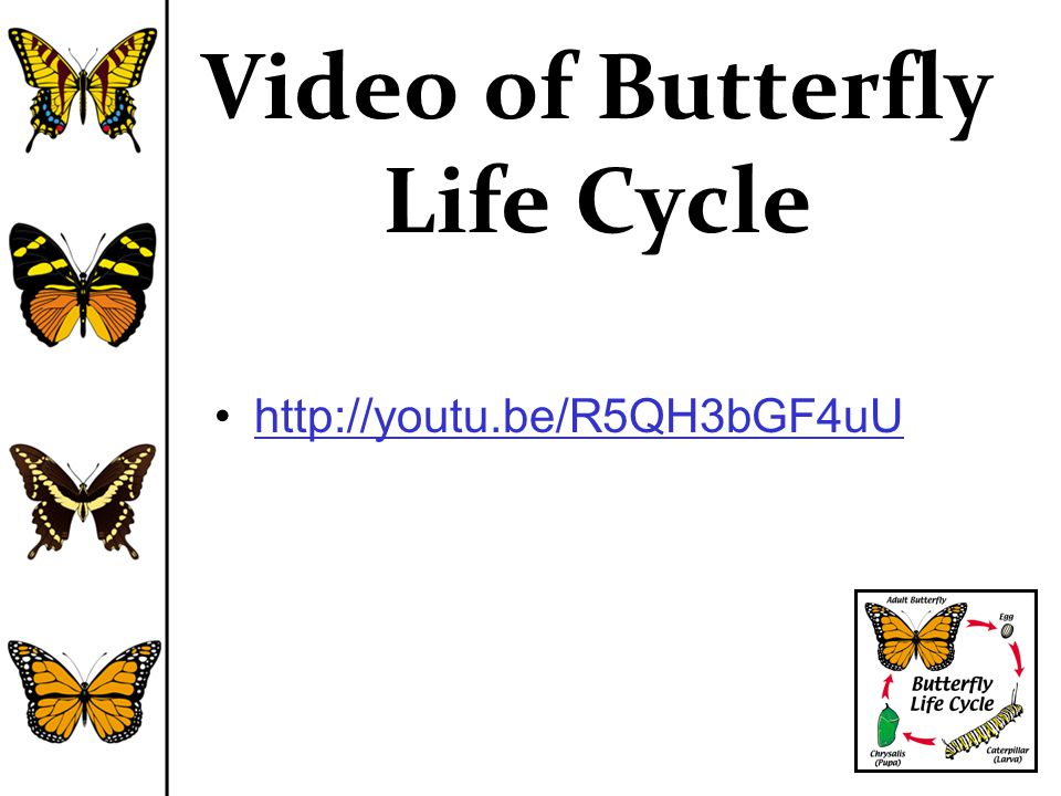 Video of Butterfly Life Cycle